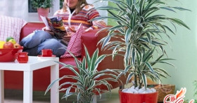 Ядовитые домашние растения. Насколько это опасно?