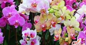 Что делать, если у орхидеи желтеют листья
