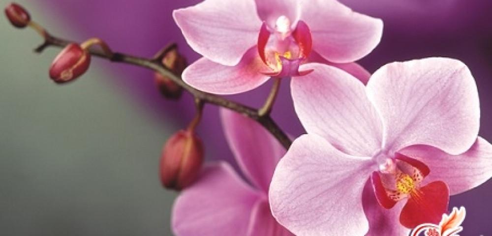 Уход за орхидеей после цветения в домашних условиях