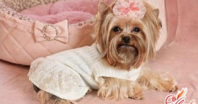 Как сшить одежду для собаки: мода своими руками