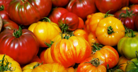 Самые лучшие сорта тепличных томатов для Подмосковья на 2019 год