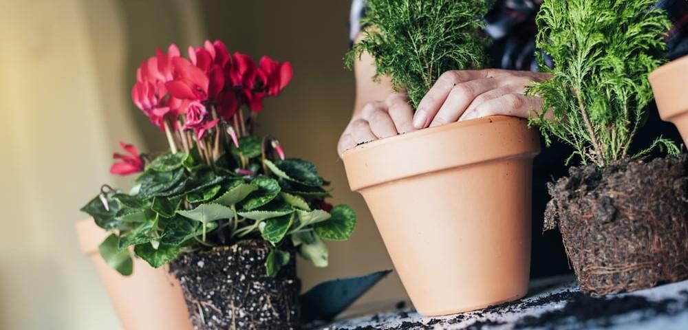 Как бороться с вредителями комнатных растений