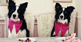 Породы декоративных собак — любовь и преданность в миниатюре