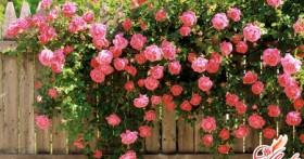 Вьющиеся растения для сада: любовь с первого взгляда