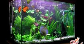 Как ухаживать за рыбками в аквариуме? Инструкция для начинающих