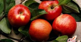 Способы заготовки на зиму яблок для пирогов