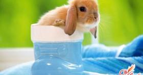 Карликовые кролики: уход, питание, выбор породы
