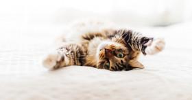 Сроки и признаки беременности кошки