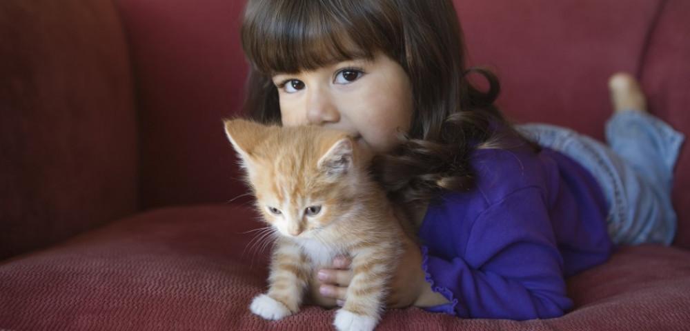 Сиамские кошки и дети как помочь им ужиться