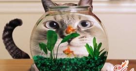 Наводим рыбкам чистоту: как чистить аквариум