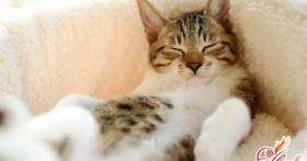 Как избавиться от запаха кошачьей мочи? Выбираем средства и способы