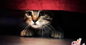 Как вывести запах кошачьей мочи? Подручные и специальные средства