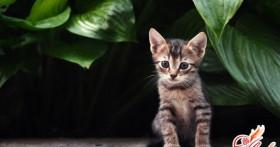 Чем кормить котенка: сбалансированный рацион c первых месяцев жизни