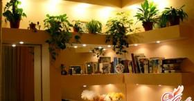 Ампельные растения в интерьере квартиры: поднимаемся вверх!