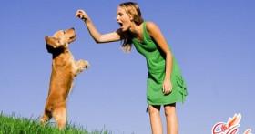 Дрессировка собак — для чего и как тренировать своего питомца?