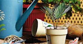 Забота о зеленых питомцах: пересадка комнатных растений