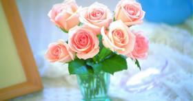 Однолетние цветы для дачи. Быстро, просто и шикарно!