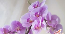 Орхидея комнатная: многообразие видов и их особенности