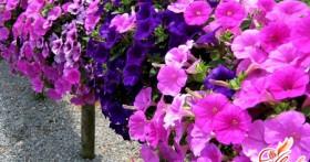 Торфяные таблетки для рассады — садово-огородническое ноу хау