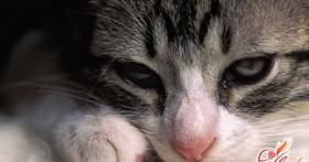 Как лечить понос у кошки?