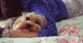 Средства, способные устранить запах собачьей мочи