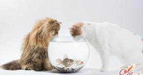 Чем кормить стерилизованную кошку: правильный рацион как залог долгой  жизни
