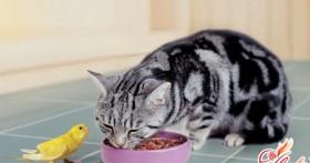 Чем кормить кошку, или Меню для маленького хищника