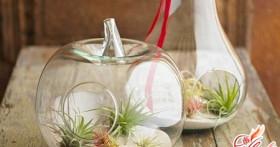 Сад в стекле: флорариум своими руками