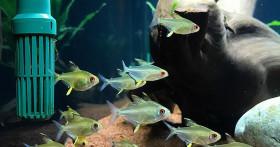 Правила ухода за аквариумом — забота о созданном вами мире