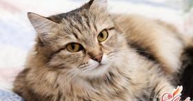 Чем кормить кота: здоровье питомца в ваших руках