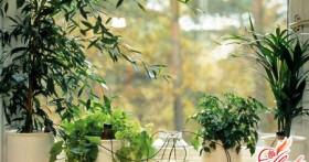 Заботимся о зеленых питомцах: автоматический полив комнатных растений