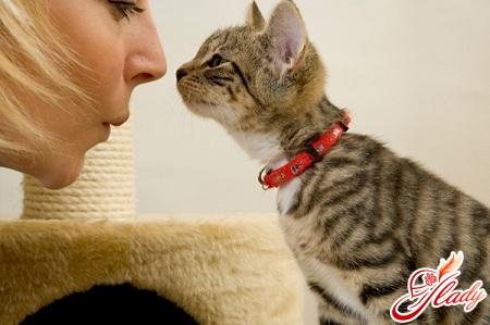 какие кошки лечат