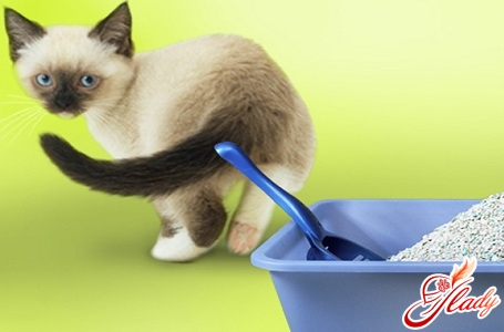 как избавиться от запаха кошачьей мочи самостоятельно