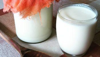 Польза и вред молочного гриба