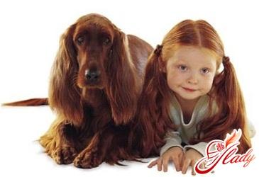 ребенка покусала собака