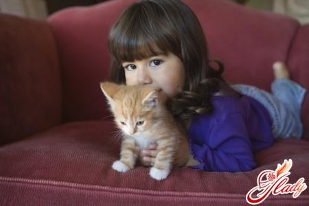 кошки и новорожденные дети