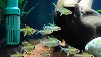 Правила ухода за аквариумом – забота о созданном вами мире