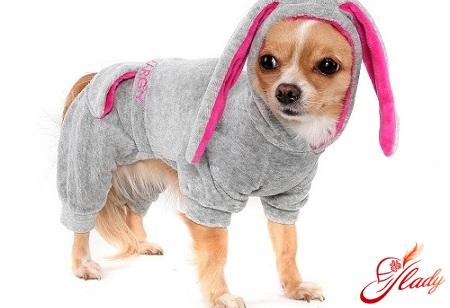 как сшить собаке одежду