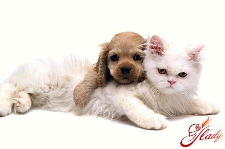 как подружить кошку с собакой правильно