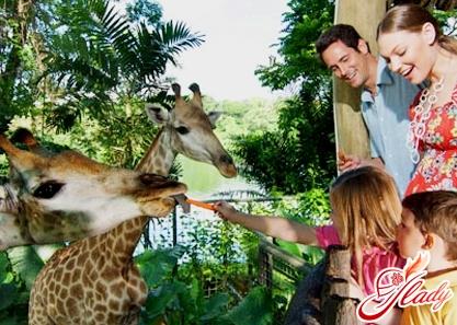 сингапур зоопарк достопримечательности