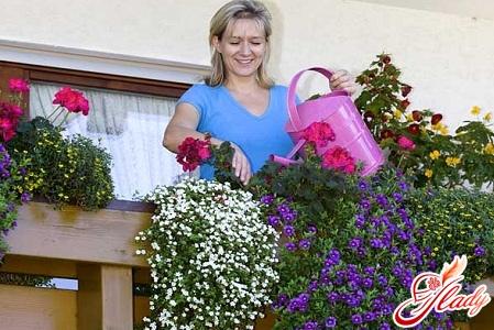 Композиции из цветов на балконе фото