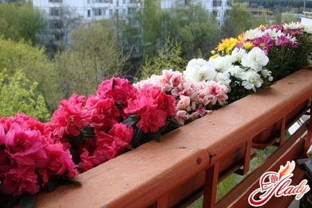 какие цветы выращивают на балконе