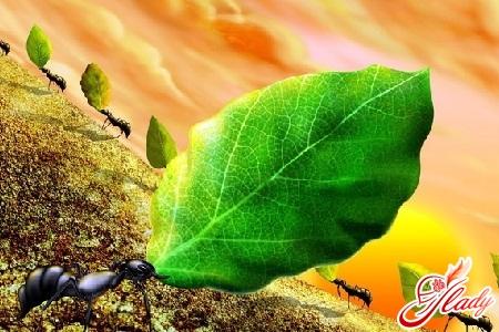как избавиться от домашних муравьев