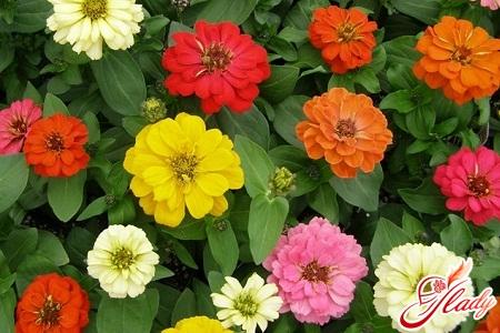 как вырастить крепкой здоровой рассаду цветов