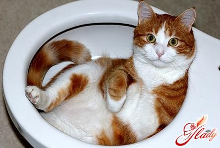 как приучить к унитазу кошку