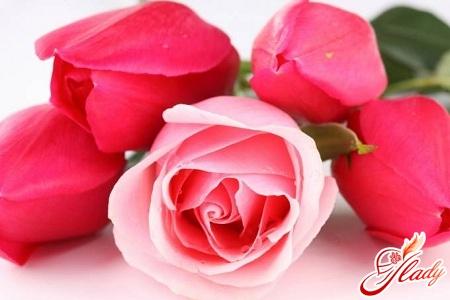 розы лучшие сорта