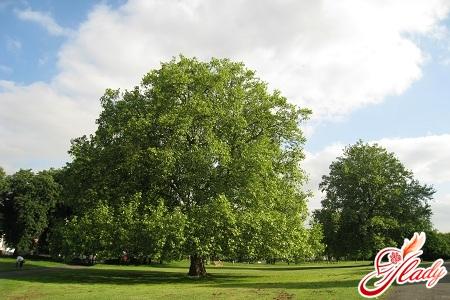 обрезка деревьев плодовых