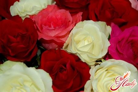 комнатные розы сорта