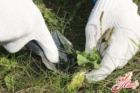 гербициды борьба с сорняками