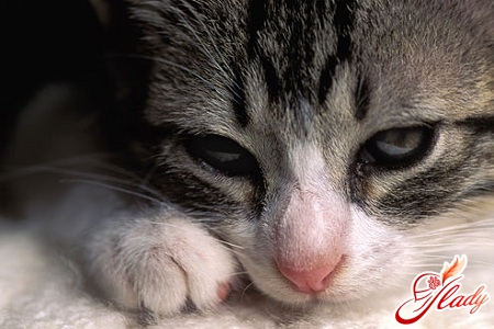 Просквозила глаз болит чем лечить